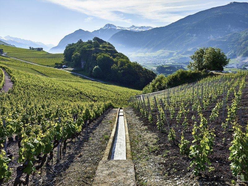Les vignes de la Cave des Oasis à Flanthey dans le vignoble valaisan