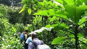 Explore Rwanda