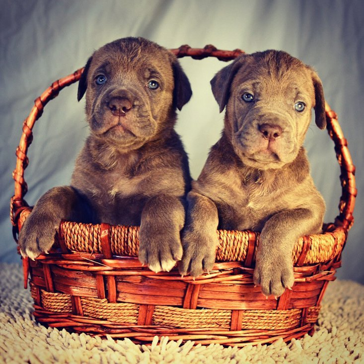 OUR LITTER - NO PUPPIES AVAILABLE
