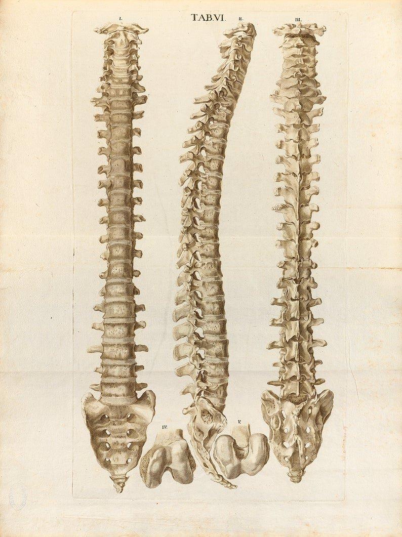Approccio Muscolo-Scheletrico Strutturale