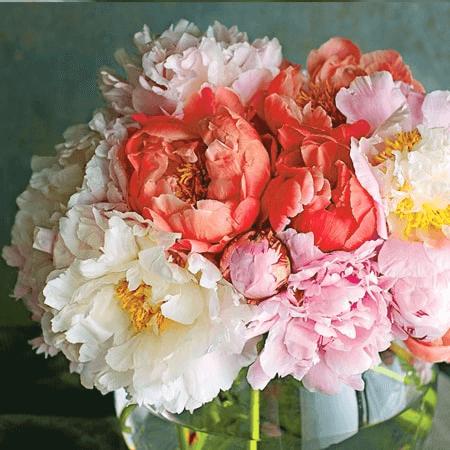 Hoa Mẫu Đơn thể hiện cho sự bao dung của người Mẹ