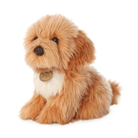 Chó bông Poodle