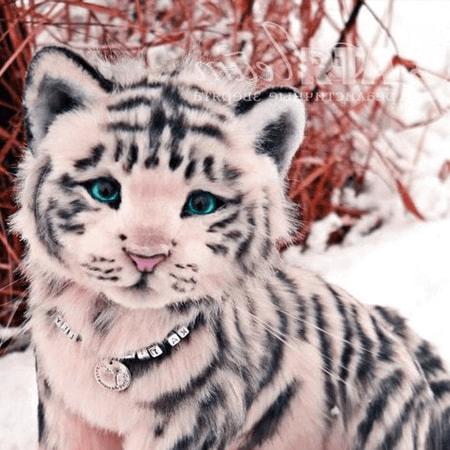 Câu chuyện con hổ tham lam