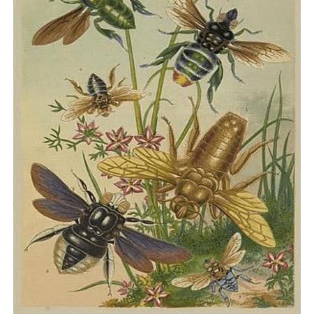 Câu chuyện con ruồi và ong mật.