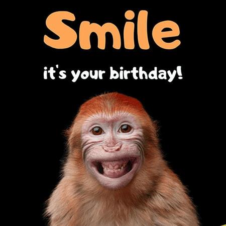 Chú khỉ ngộ nghĩnh thay bạn gửi lời chúc sinh nhật siêu hài hước