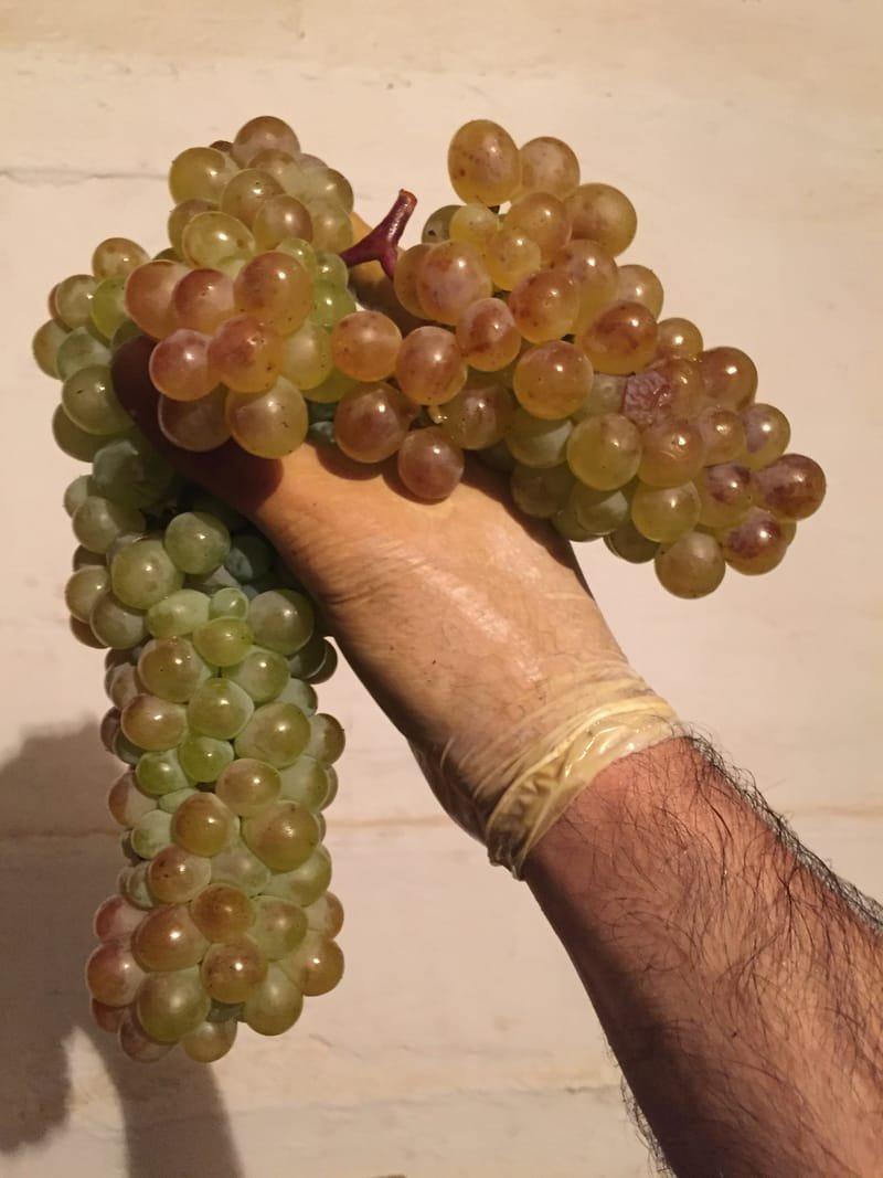 Rkatsiteli Grape (organic)