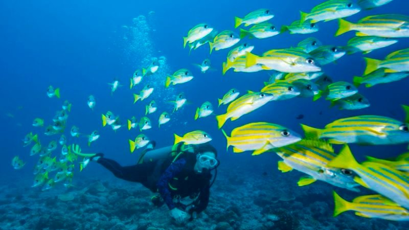 Strategies for Choosing Scuba Diving Training Services