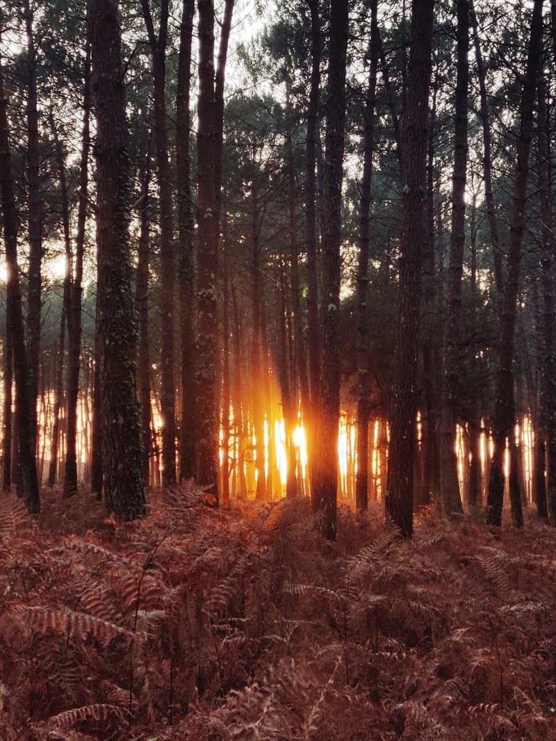 Ressources Forestières