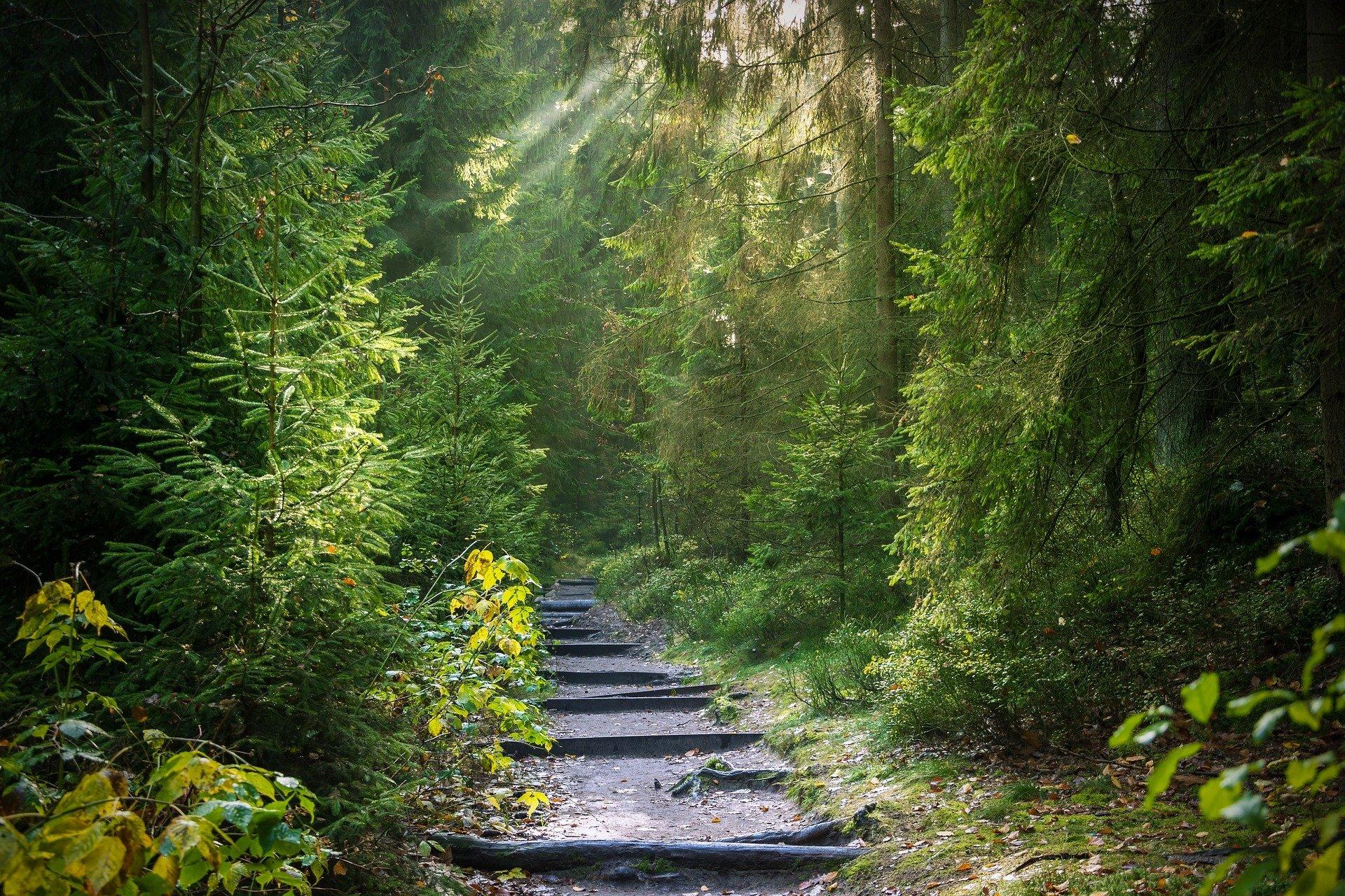 Votre Chemin de Vie