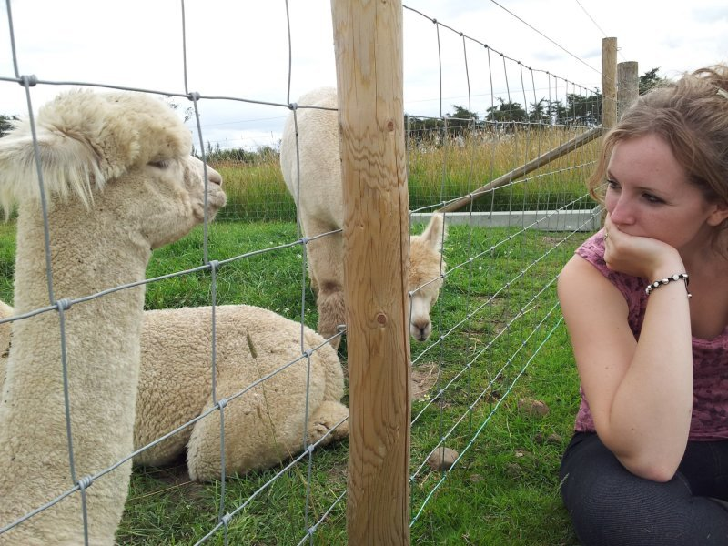 Amy just Chilling with the alpacas when we first moved here