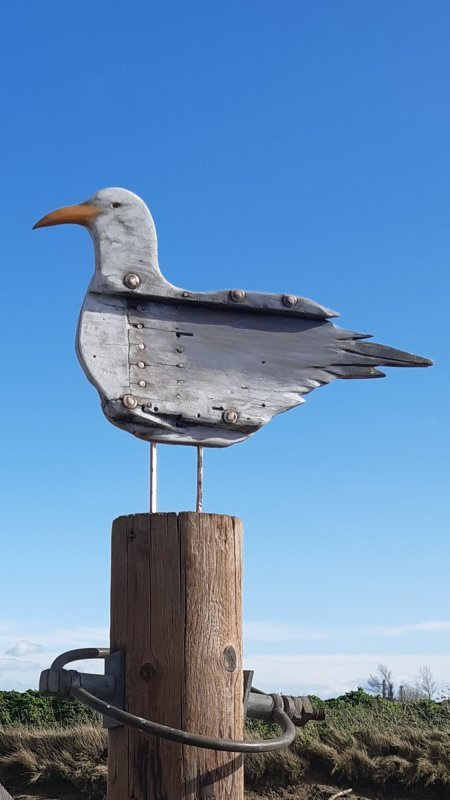 Herring Gull, 360'