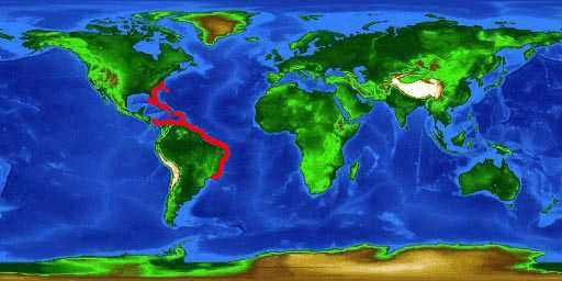 World distribution map for the longsnout seahorse