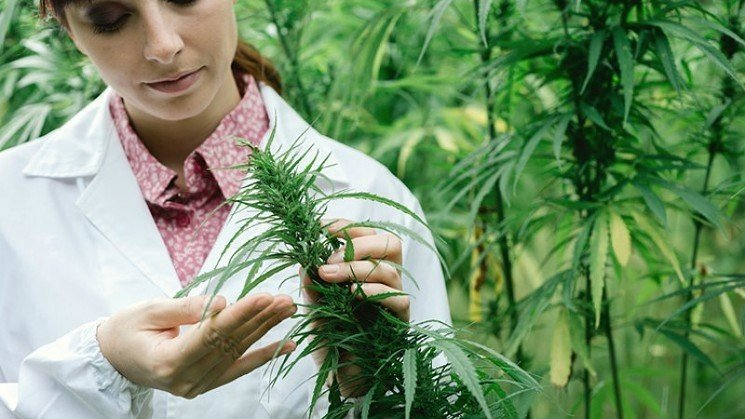 Benefits of Cannabis and How It Is Used