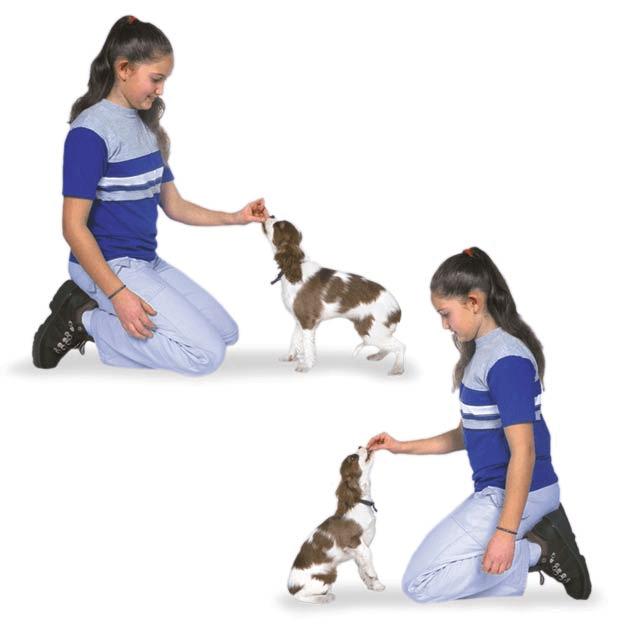 teach dog to sit
