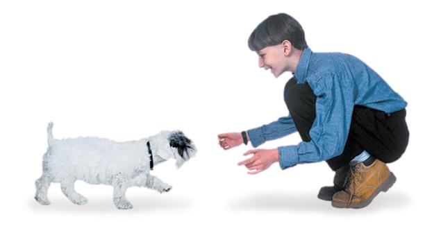 teach dog to come