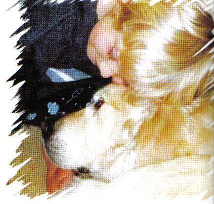 הכשרת כלב טיפולי