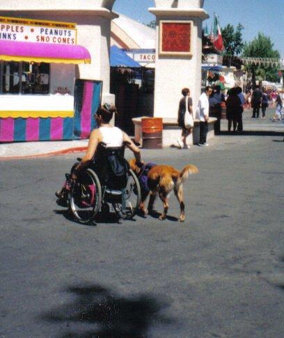 הכשרת כלבי עזר לילדים ומבוגרים  בעלי מוגבלויות פיזיות, קוגניטיביות  ונפשיות