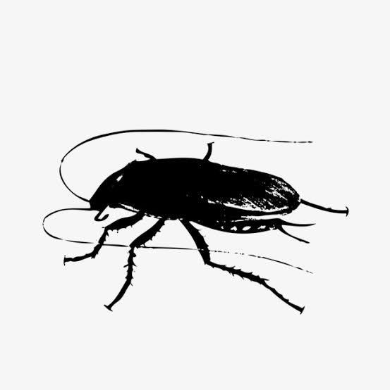 مكافحة الصراصير