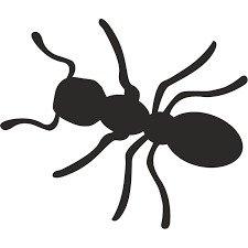 مكافحة النمل والنمل الابيض