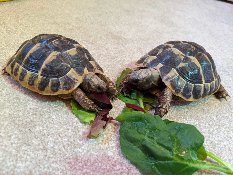 The Torts