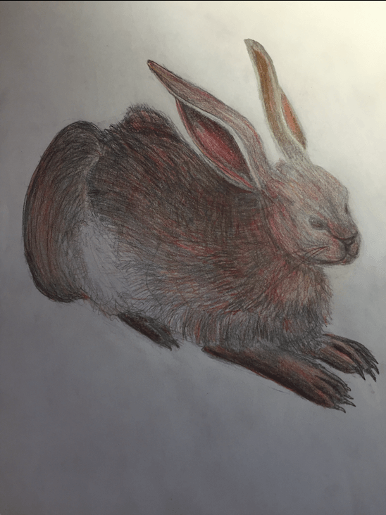 RED-hare-in-midair