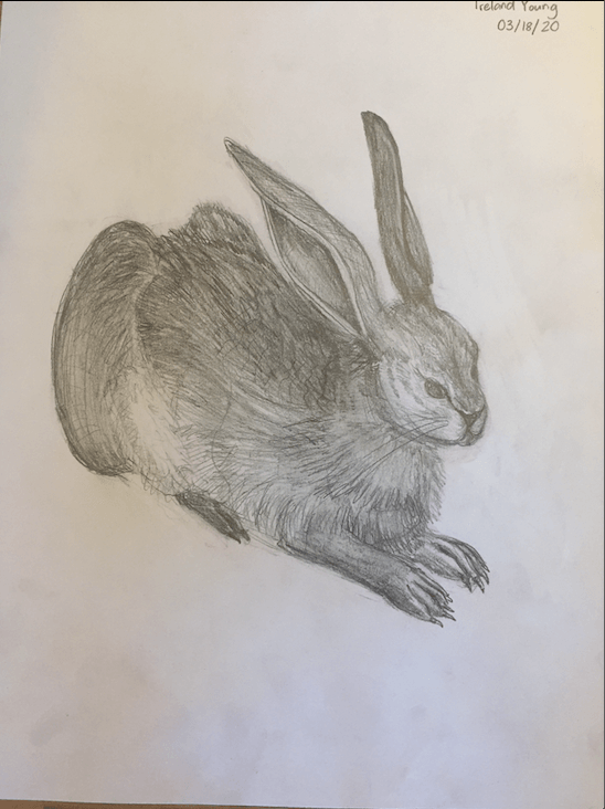 Hare-in-midair