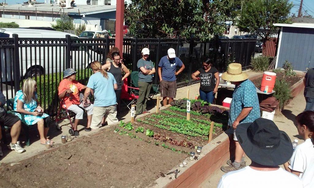 Planting a salad garden