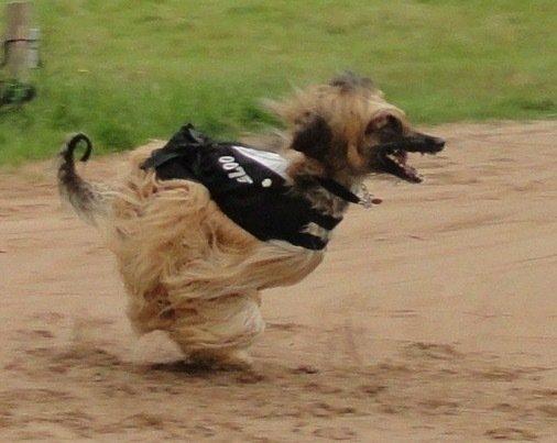 Afghan Racing.