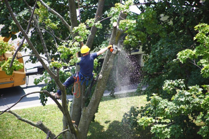 Considerations to Make When Choosing a Tree Pruning Service