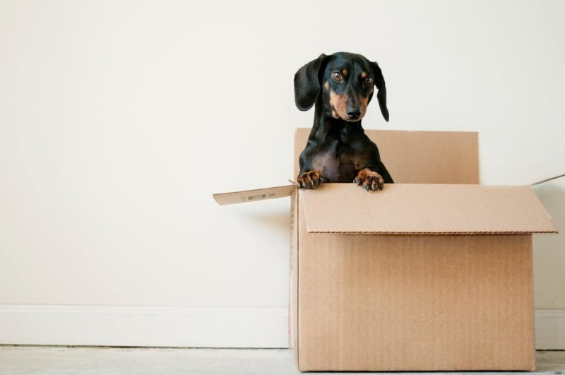 Top Benefits of Using the Services of a Reputable Long-Distance Moving Company