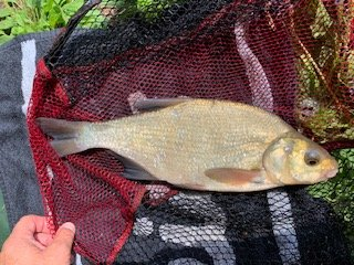 Bream for the Padget Family Day at Pond House
