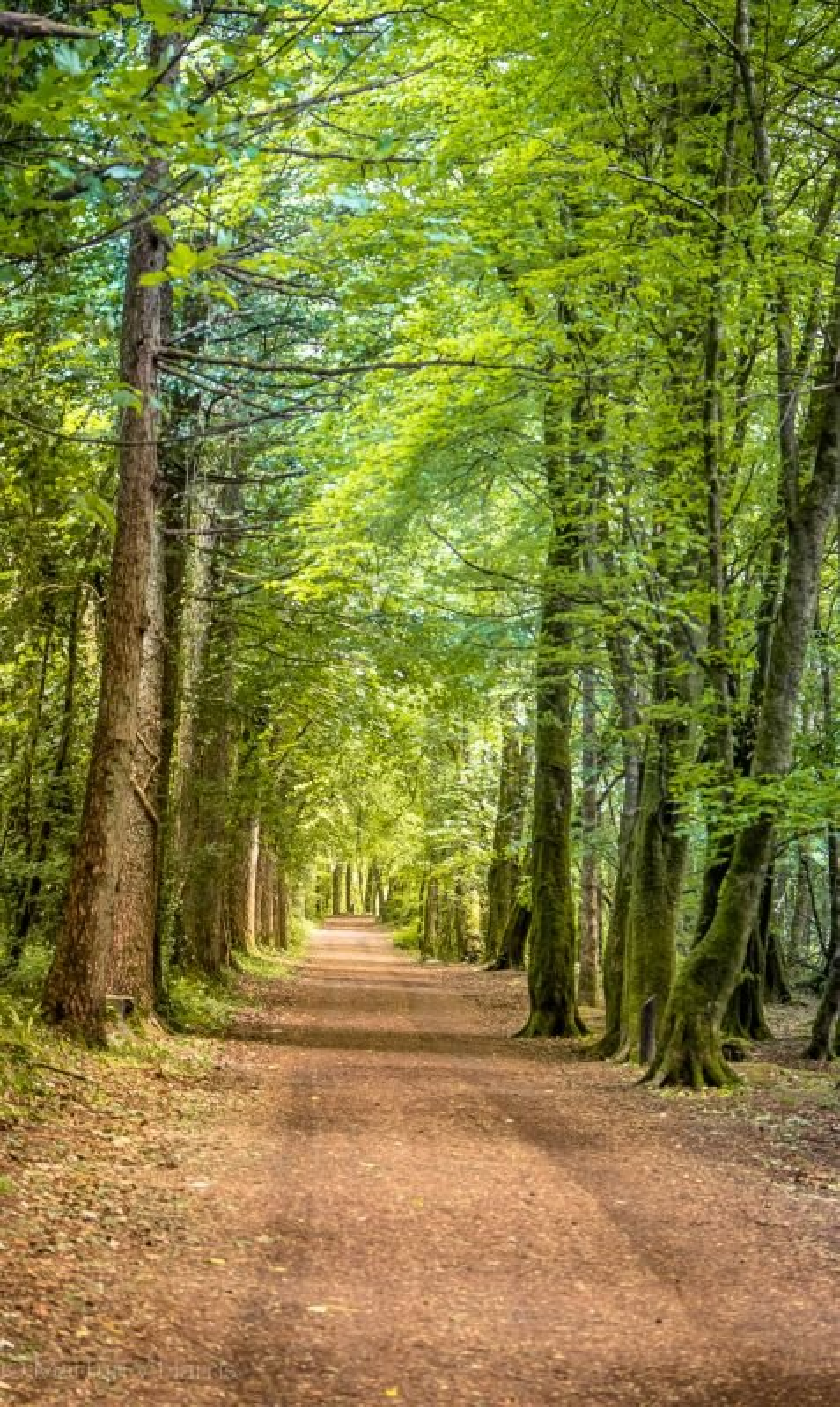 Belleek woods near Ballina