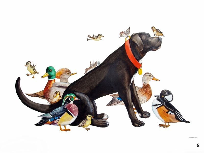 Bird Dog Duck Duck Dog