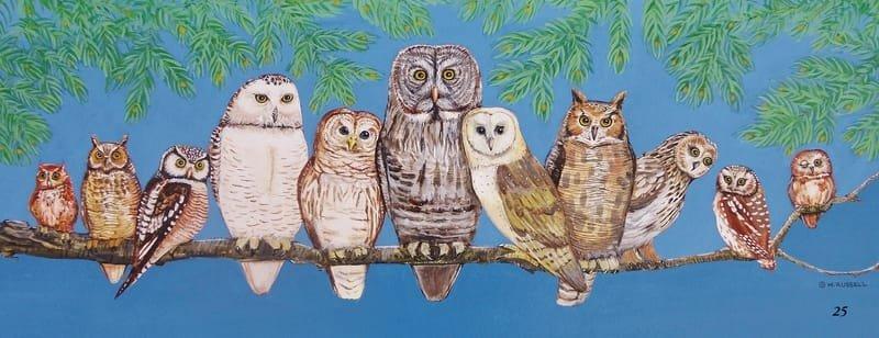 Owl Watch Full