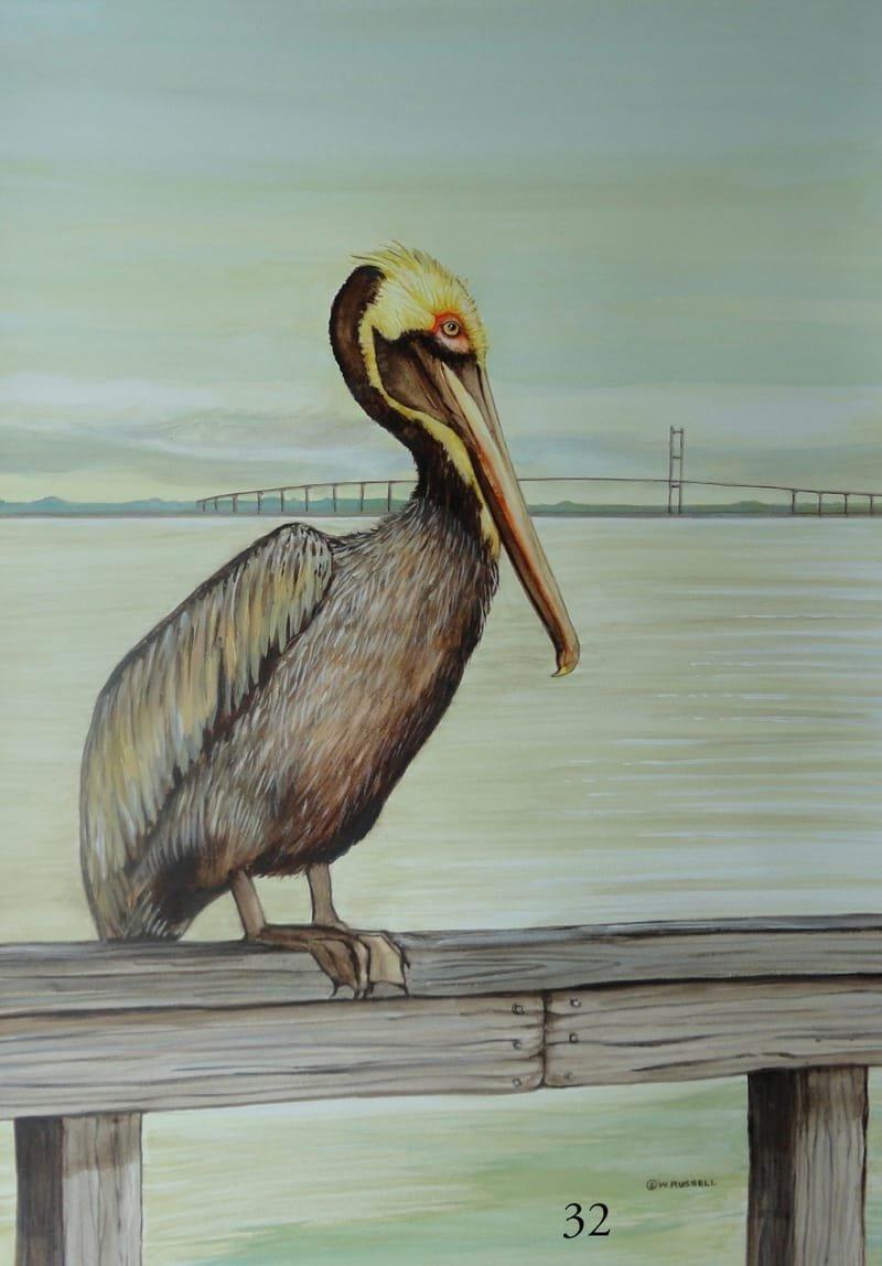 Pelican Bay Watch
