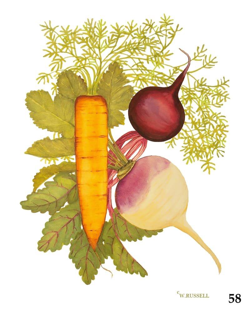 Vegetable Trios Series Carrot