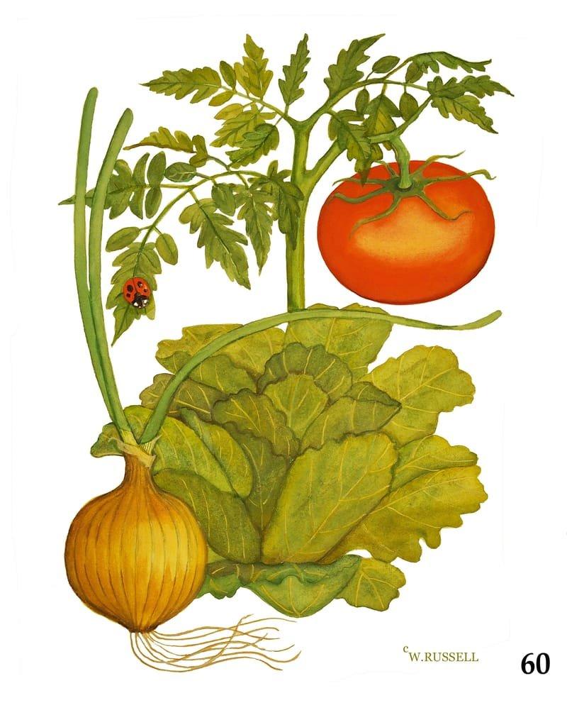 Vegetable Trios Series Tomato