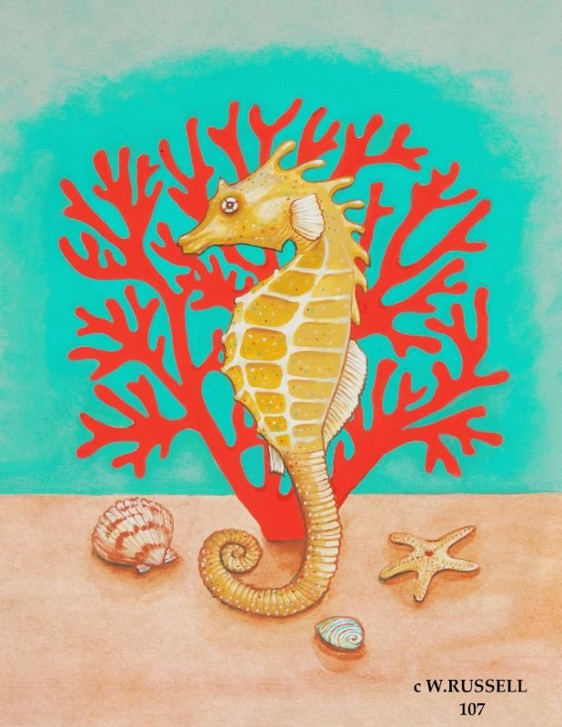 Seahorse on Coral