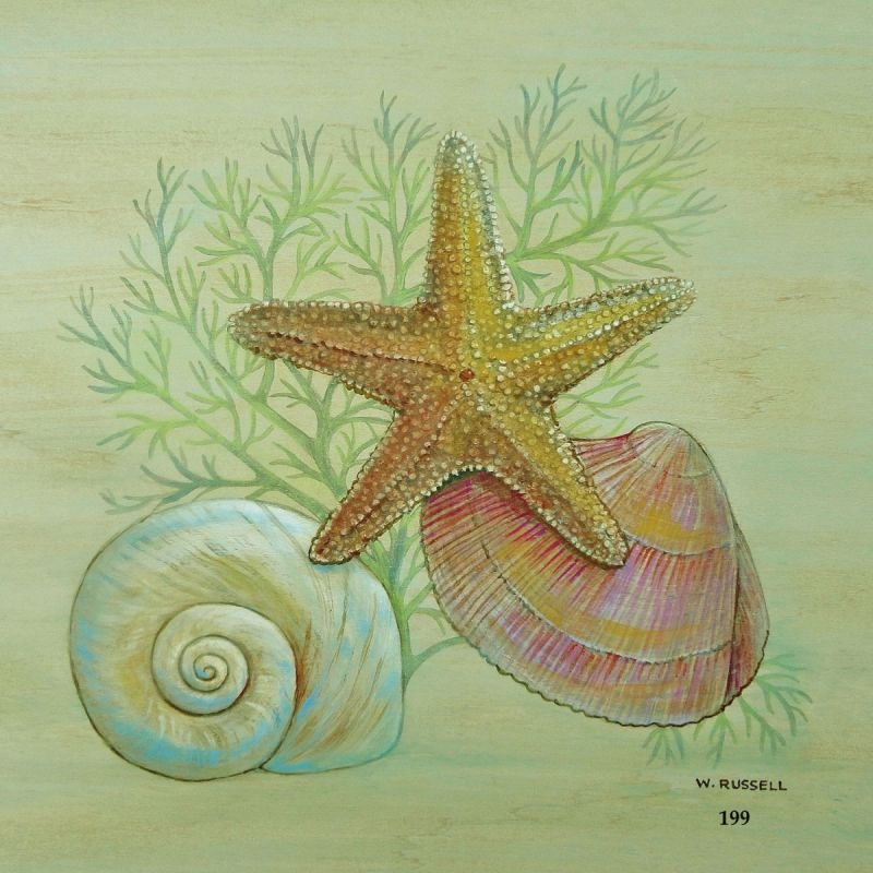 Seashell Trios Series with Starfish