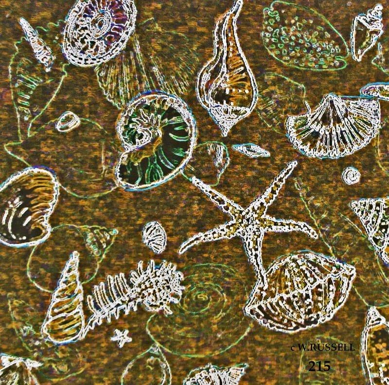 Scattered Seashells Sand