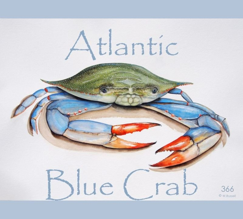 Crabby Girl aka Atlantic Blue Crab with Text