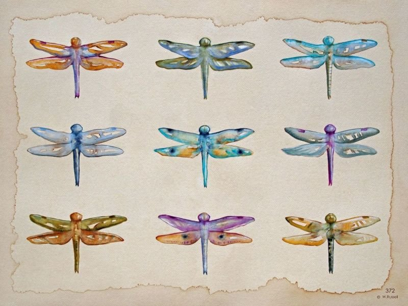 Dragonflies Glimmer no Text