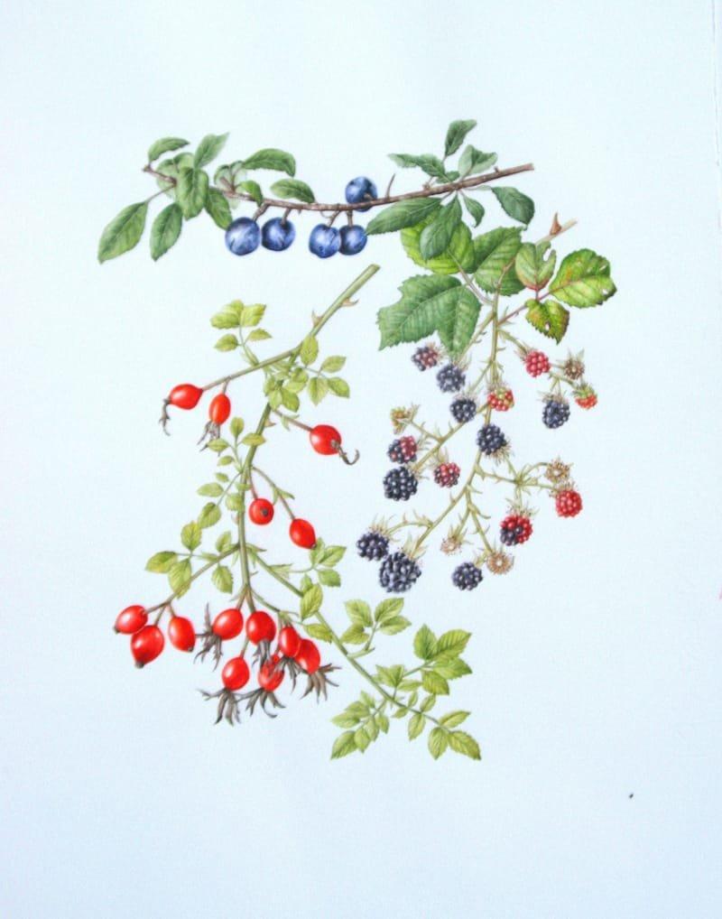 Autumn Hedgerow Fruits