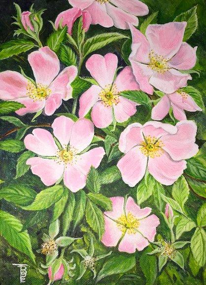 Wild Roses (Rosa Canina)