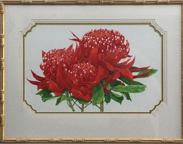 Waratah (Telopea Speciosissima) - New South Wales (Australia) state Emblem