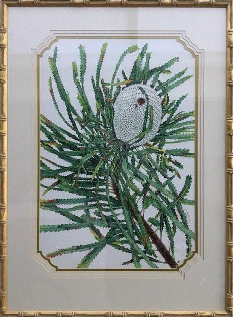 White Banksia (Banksia Aemula)