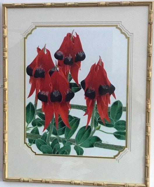 Sturt's Desert Pea (Swainsona Formosa) - Floral emblem of South Australia
