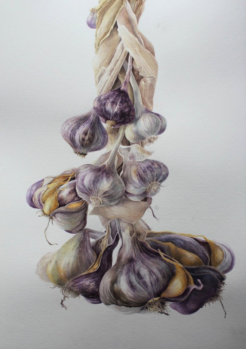 Garlic 'Germidour'
