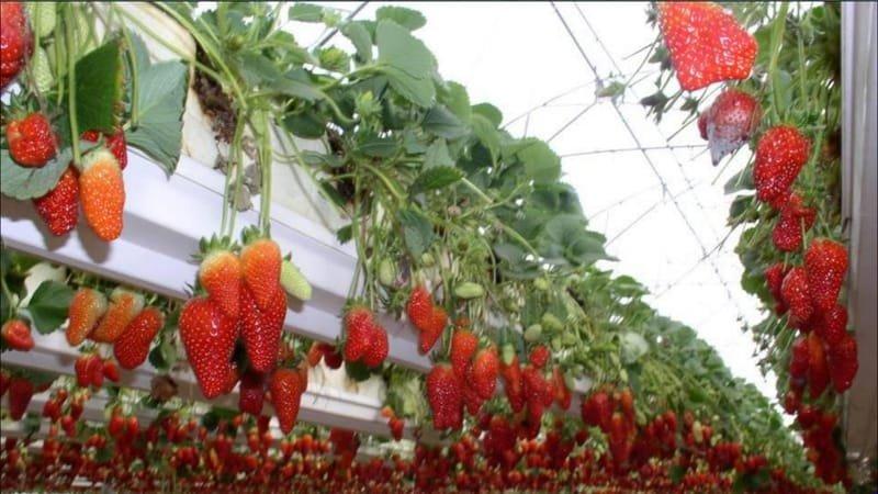 Greenhouses Main Benefits